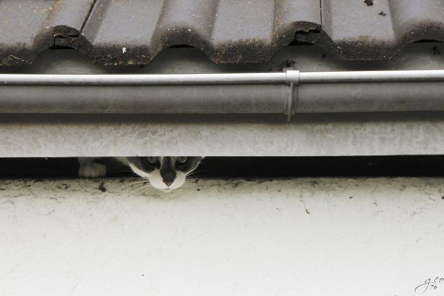 24-07-2011---LE-CHAT-MATE.JPG