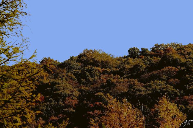 31-10-2011---FORET-D-AUTOMNE.JPG