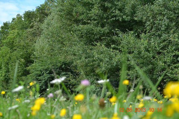 2013-08-12-Nature 0437