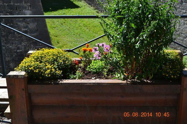 2014-08-05-Un-tour-au-marche--Vauban 4735