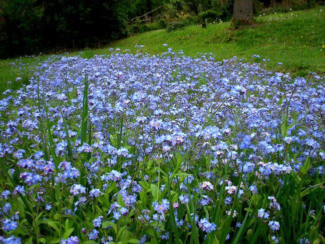 1er-mai-2010-Gaudeix-fleurs 7868