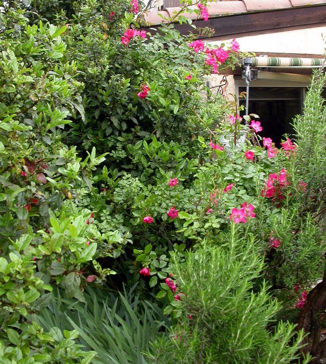 Eclosion de couleurs au jardin le blog de capucine30 for Au jardin des couleurs