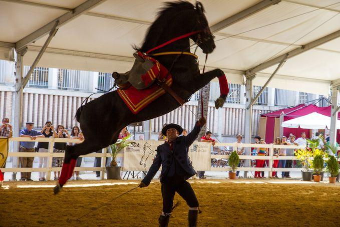 Jerez-2012 7111