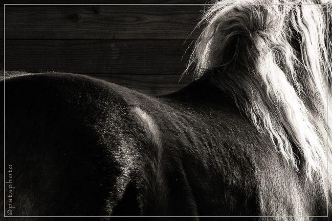 Noir-Blanc 0473