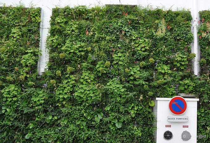 Mur-Vegetal---Cergy-08-c-Ger-rd--1600x1200-.jpg