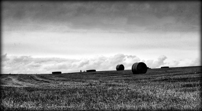 Noir---Blanc--monochromes--9796-sep.jpg