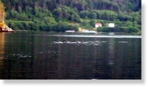 Norway_Lake_Snake-copie-1.jpg