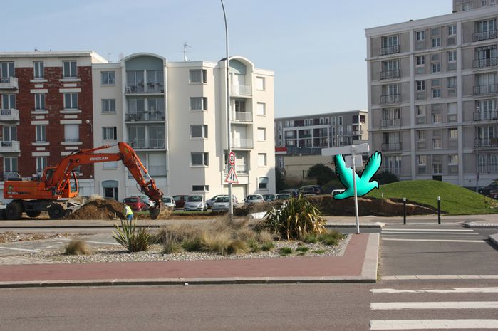Havre mouettes (2)