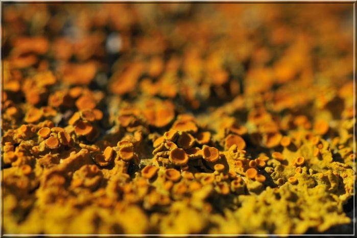 lichen 171