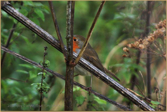 Animaux--oiseaux-2559.JPG