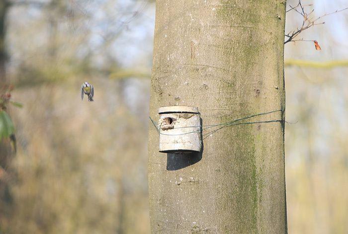 nid de mésange