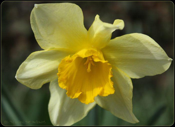 Macro---Fleurs--Plantes--Vegetaux-. 4434