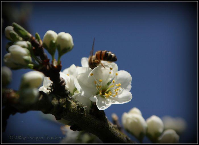 Fleurs, insectes, gouttes et autres macro.. 4866