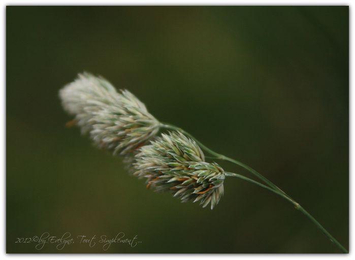 Fleurs, insectes, gouttes et autres macro.. 2834