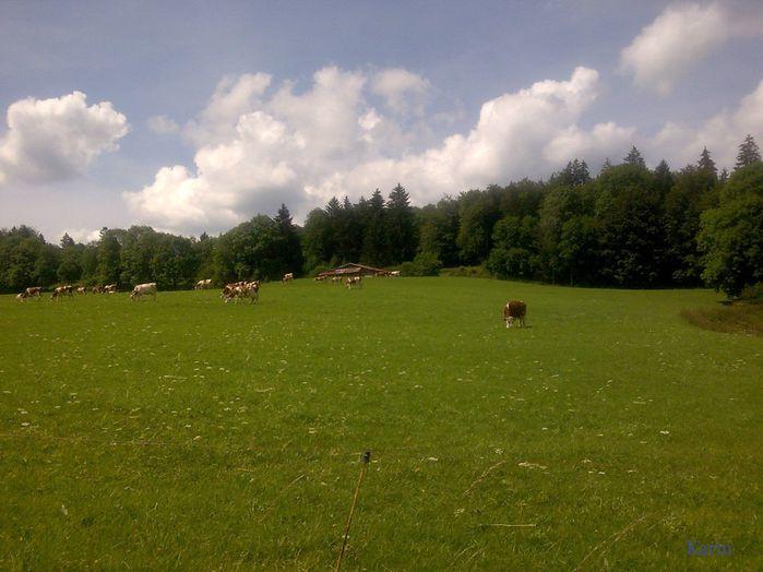 vaches-Grangettes.jpg
