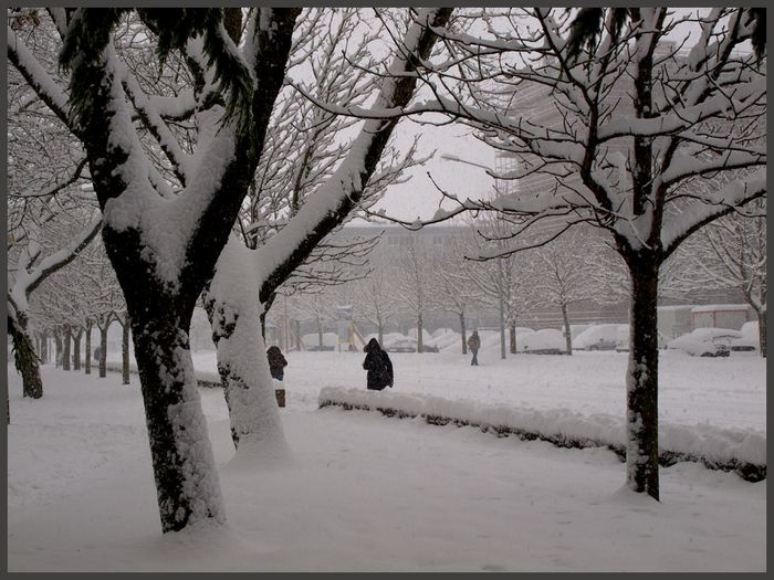 Cherbourg neige 2010 f