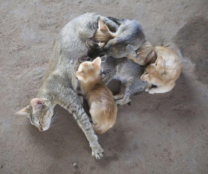 Josey et les poupées chat chatte