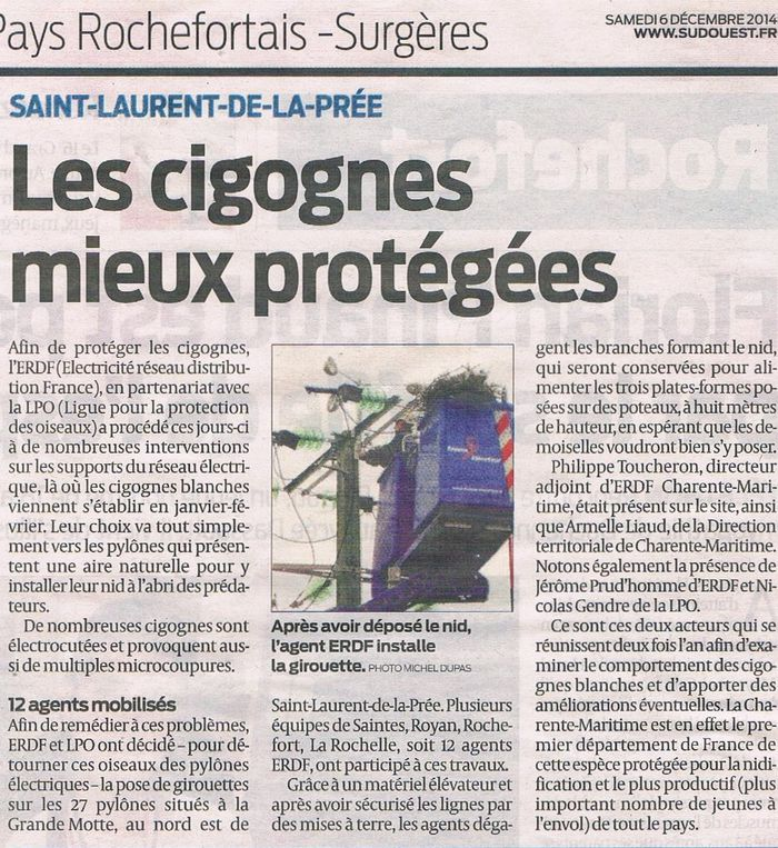 artSO-du-6122014-Les-cigognes-mieux-protegees.jpg