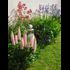 JARDINS  CLAYE-SOUILLY ET SES ALENTOURS