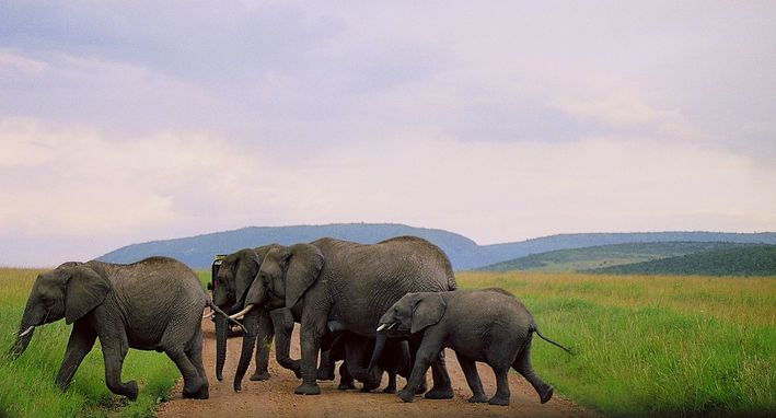 Mon voyage au Kénya !