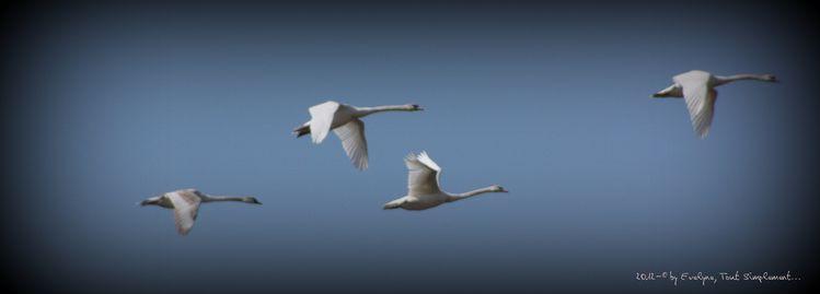 Animaux--oiseaux-4868.JPG