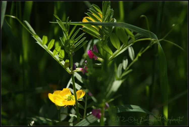 Macro---Fleurs--Plantes--Vegetaux-. 6137
