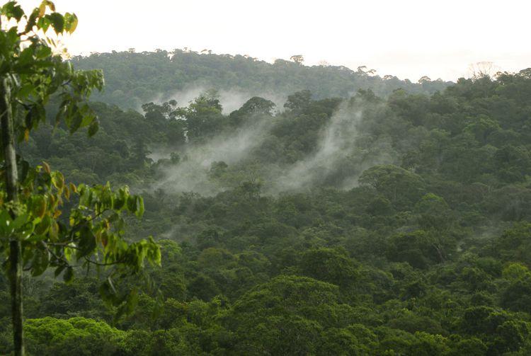 Guyane Treck Canope 36m Vue 2