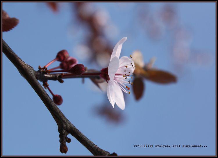 Macro---Fleurs--Plantes--Vegetaux-.-4777.JPG