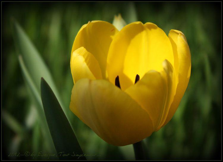 Macro---Fleurs--Plantes--Vegetaux-. 4917