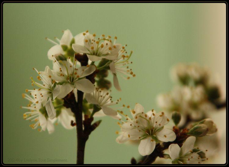 Macro---Fleurs--Plantes--Vegetaux-.-4904.JPG