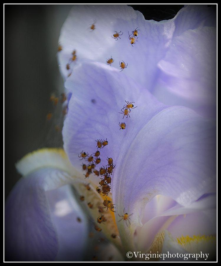 fleurs-0005.JPG