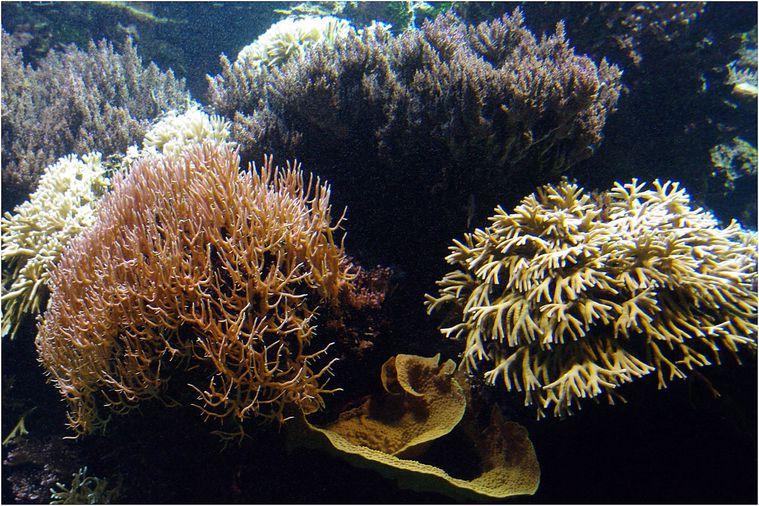 oceanopolis030