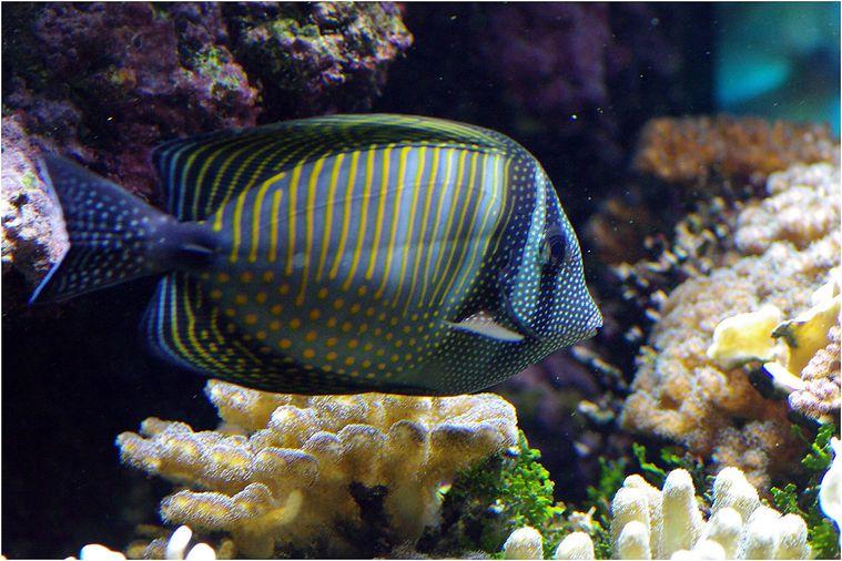 oceanopolis041