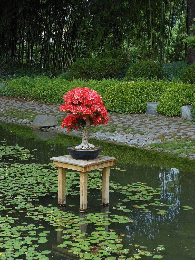 bonsai-rouge.jpg