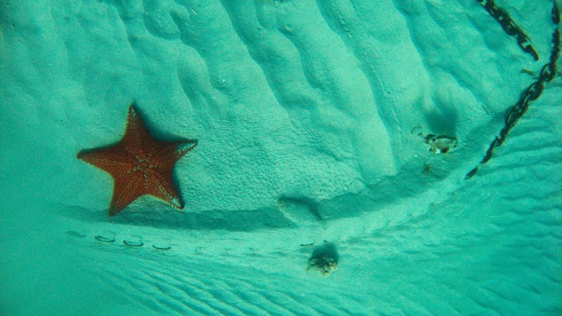 Etoiles de Mer Communes Poison Coffre1 Canouan