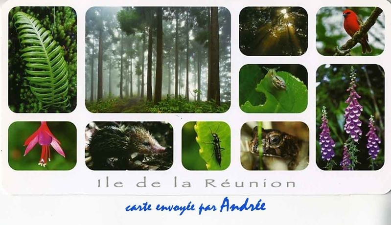 foret-reunion-andree.jpg