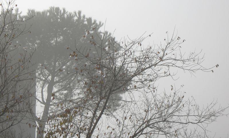 Niebla-dic09 3050