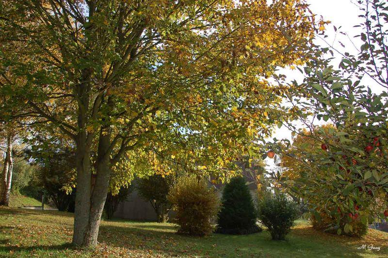 automne-terrain-6229.jpg