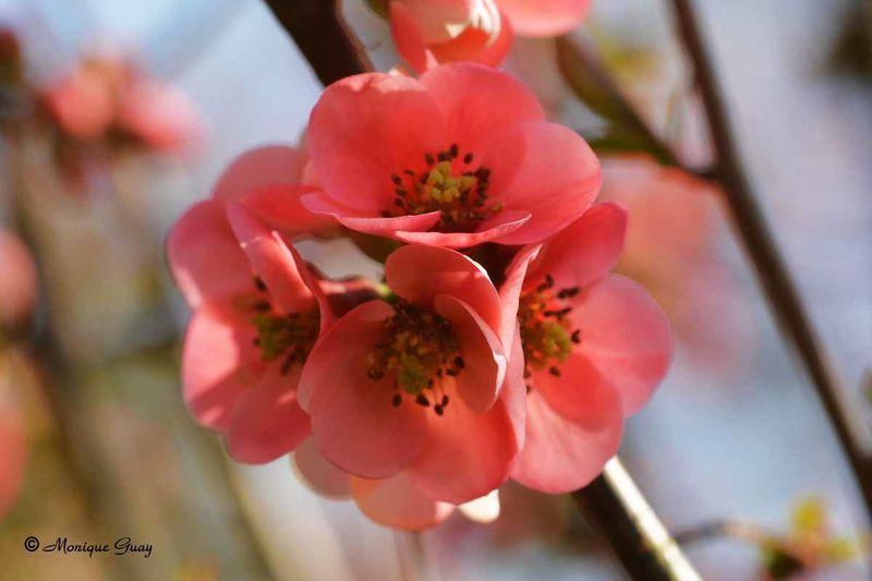fleur-rose-3056.jpg