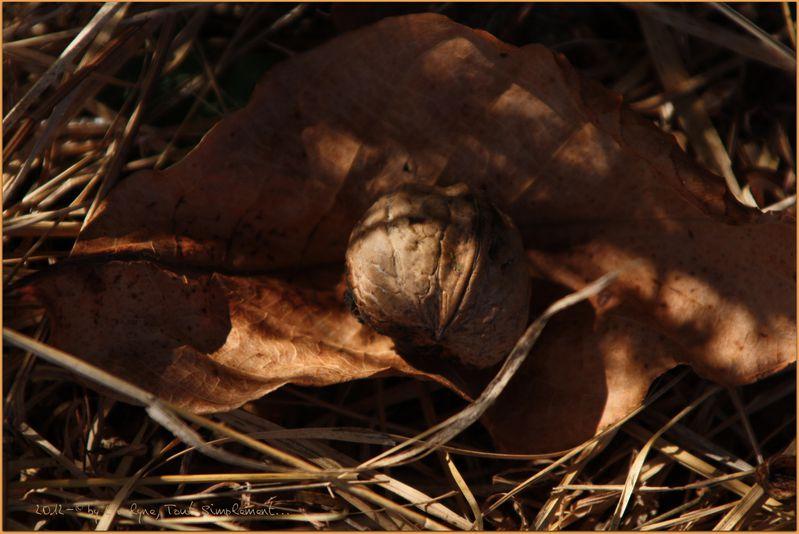 Macro-Fleurs-Plantes-Vegetaux-2 1307