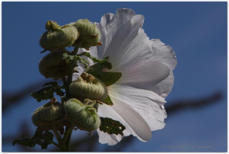Macro-Fleurs-Plantes-Vegetaux-2-0716.JPG