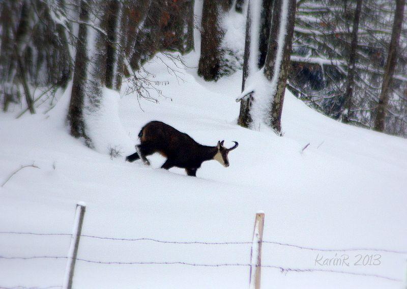 neige-foret-Montperreux 6085