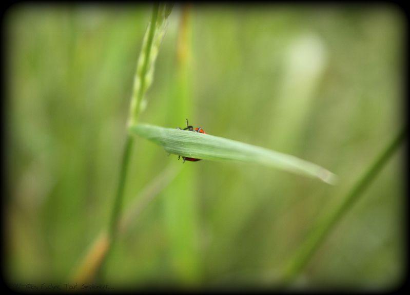 Macro---Insectes--Papillons--7654.JPG