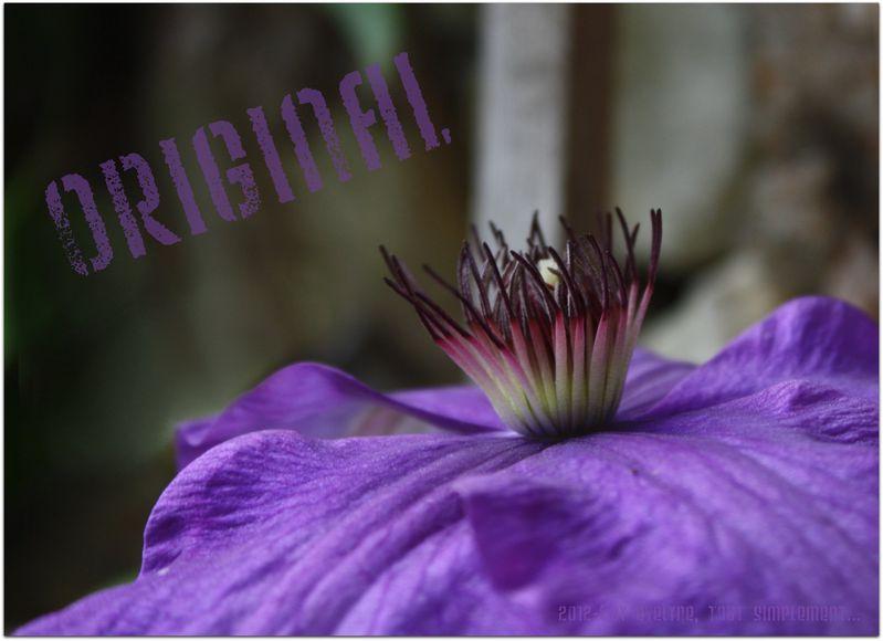 Macro---Fleurs--Plantes--Vegetaux-.-6035.JPG