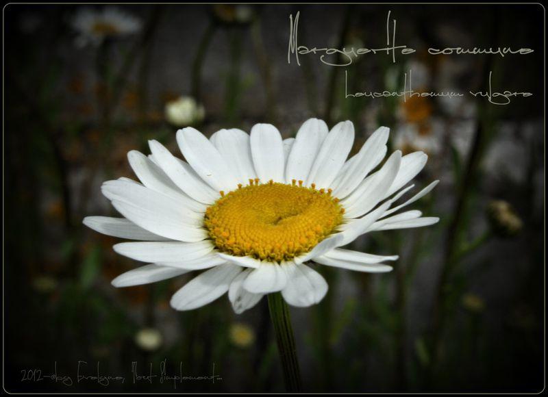 Macro---Fleurs--Plantes--Vegetaux-.-6363.JPG