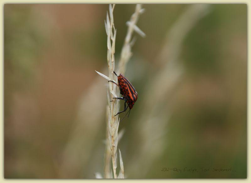 Macro---Insectes--Papillons--9773.JPG