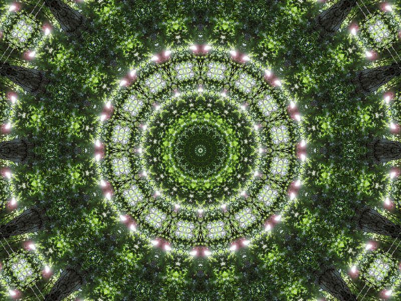 mandala-arboretum-profondeville-photofarfouille