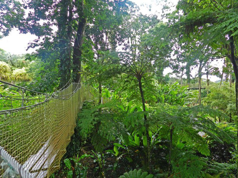 Martinique Jardins Balata 18