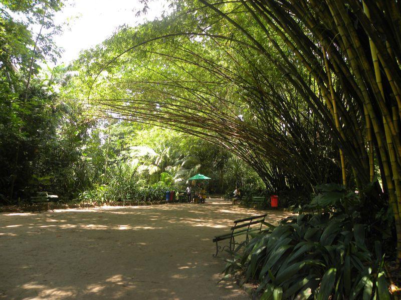 Bresil Para Belem Goeldi Bambou Geant03