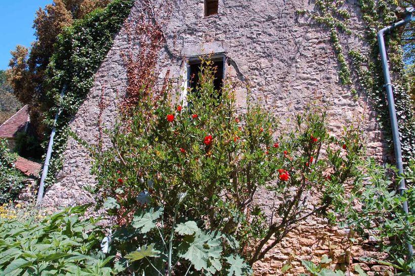 jardins-cadiot-2820.jpg